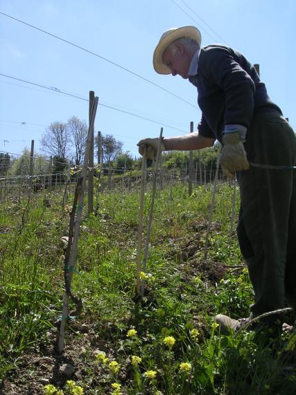 Fattoria di corsignano foto 4 for Piani di fattoria georgia